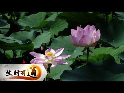 《生财有道》 20171207 江西宜丰:绿水青山 生态富民 | CCTV财经