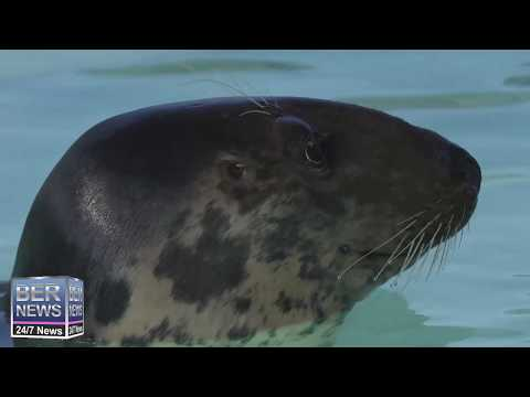 'Lou-Seal' Transported To USA, April 12 2019