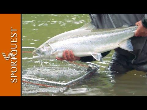 Fly Fishing For Atlantic Salmon Fishing At Reisastua Lodge, Norway