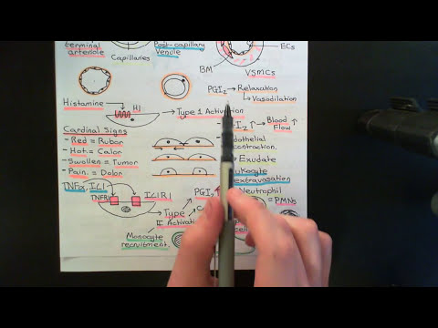 The Immune System Part 7