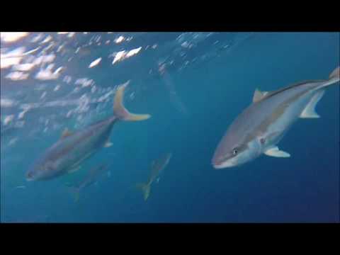 Port Stephens Kingfish Madness