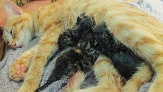 Наша кошка рожает / Our cat is giving birth(Автор видео - Виталий Лисовский музыка: