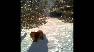 German Shepherd, Chow Chow And Shar-pei Dogs Playing In Snow