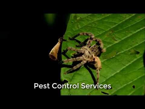 Pest Control Mesa AZ (520) 363-3181