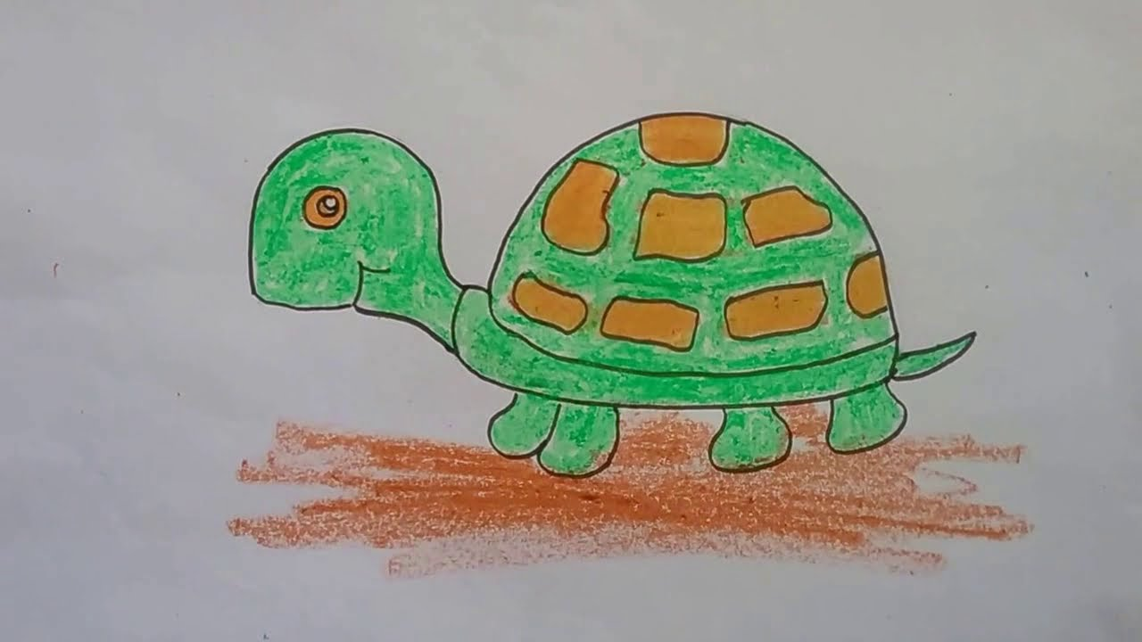 how to draw a tortoise with basic shapes tortoise drawing for kids
