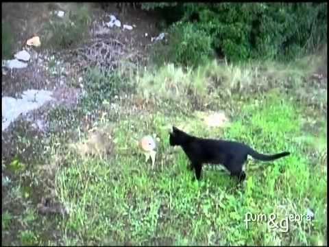 video aneh burung hantu pacaran dengan kucing hitam