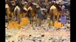 Desert & Oases Thumbnail
