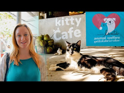 Koh Lanta Thailand 2019 - Cute Kittens at Lanta Animal Welfare
