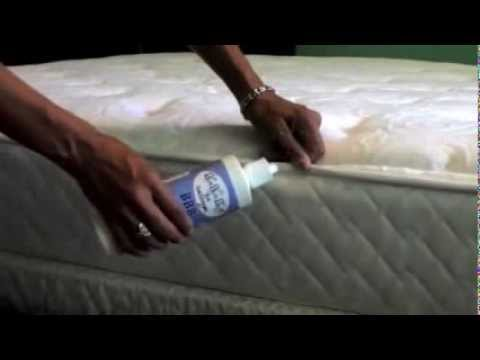 bye bye bugs - bed bugs - youtube