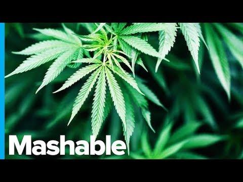 World Health Organization Calls to Reclassify Weed