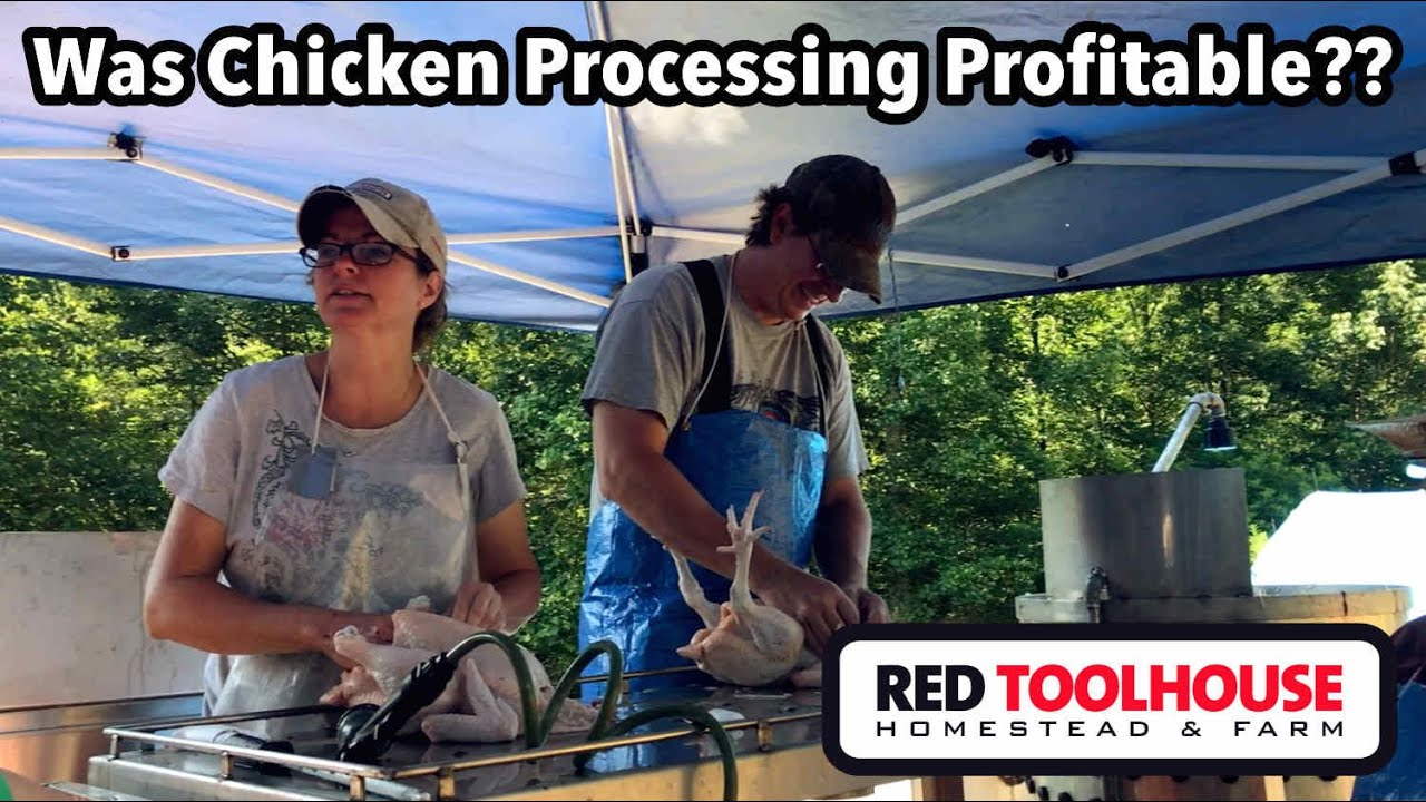 Pastured Broiler Efforts on our Farm - Was it PROFITABLE?