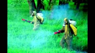 «Госдезсервис» - уничтожение насекомых.