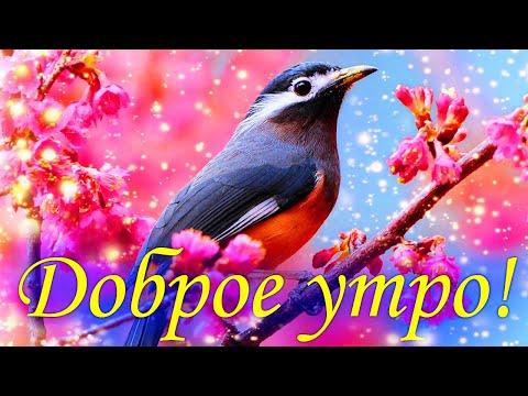 ДОБРОЕ УТРО - ХОРОШЕГО ДНЯ! - красивая музыкальная открытка