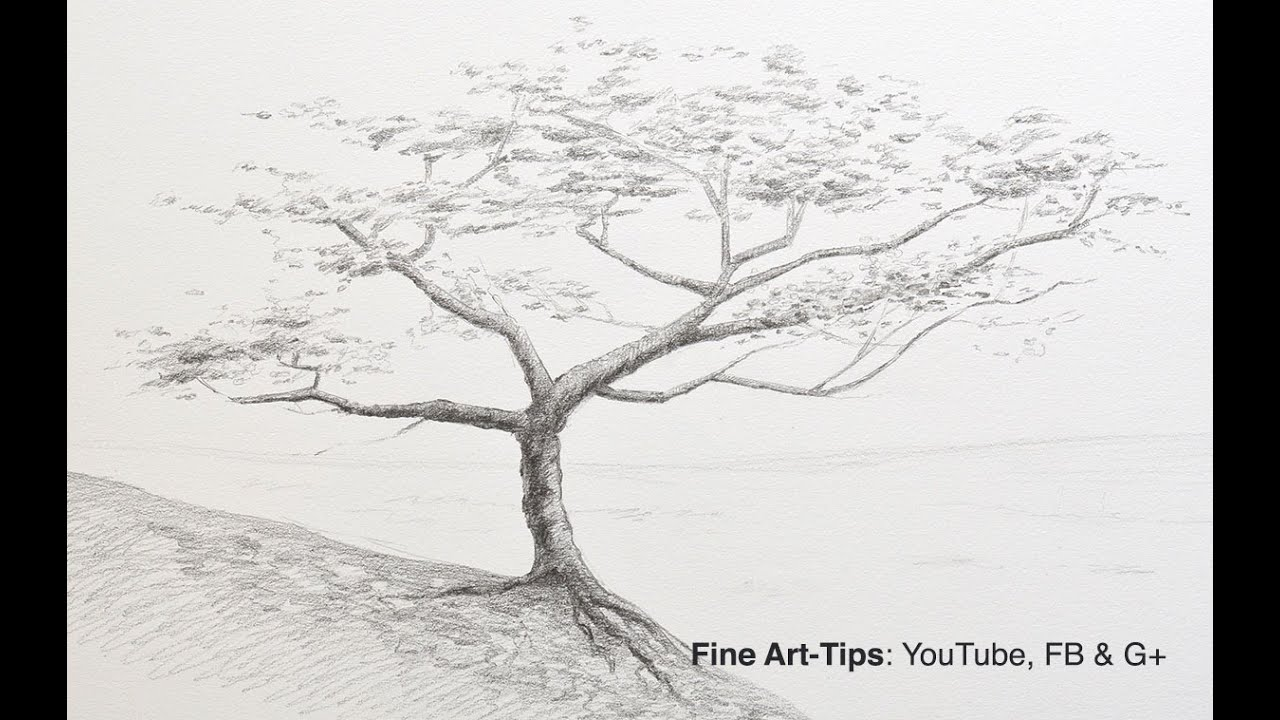 How to Draw a Tree With Pencil - YouTube