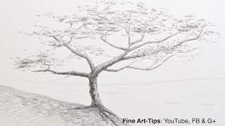 How to Draw a Tree With Pencil