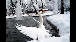 Скачать ВВС самое лучшее видео мои птицы замерзли в пруду