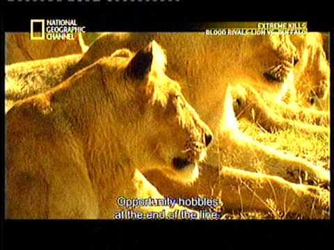 National geography channel 1