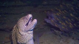 فيديو| ثعبان بحر ضخم يهاجم غواصا بشكل مفاجئ