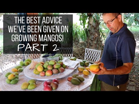 Dr. Richard Campbell Reveals His Best Advice on Mangos & Picks Favorites