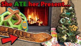Our Reptiles Open Their Christmas Gifts!