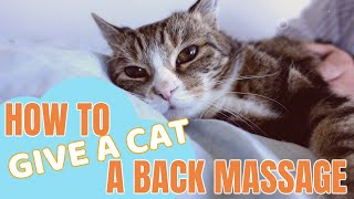 How to give a cat a back massage