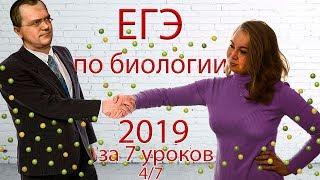 ЕГЭ биология 2019 за 7 уроков. 4/7 (законы Менделя, зародышевые листки)