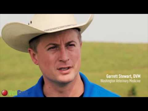 DocTalk - Wheat Pasture and Cattle Production - September 12, 2016