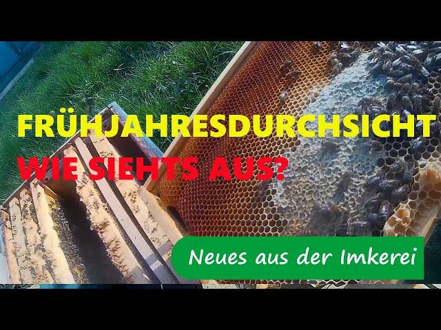 Frühjahrsdurchsicht Bienenvölker  im März - Wie siehts aus?  - Neues aus der Imkerei #68
