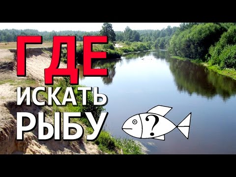 как выбрать место для рыбалки на судака