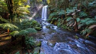 Magica atmosfera di Natura Incontaminata, Suoni Naturali, Ruscello e Canto d uccelli nel bosco screenshot 5
