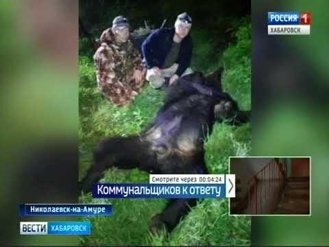 Вести-Хабаровск. Медведи в селах