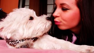 Mon Westie (west Highland White Terrier)