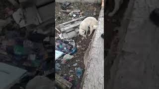 Собаку, просидевшую в бетонной яме все новогодние праздники, спасают волонтеры в Новороссийске