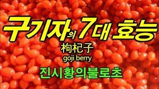 구기자  goji berry - 놀라운 효능 7가지 ~ !! 진시황과 서태후가 매일 먹었다는 그것~???
