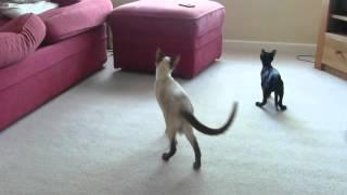 Tinks and Roxy playing with Da Bird
