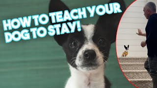 Teaching our Puppy, Spot, how to stay!