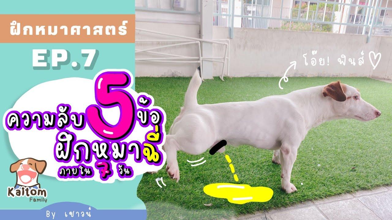 ความลับ 5 ข้อวิธีฝึกลูกหมาเด็ก \