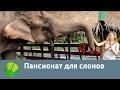 Пансионат для слонов | Живая Планета