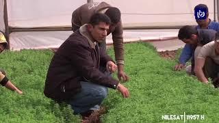 سلطات الاحتلال تمنع تصدير المنتجات الزراعية الفلسطينية - (7/2/2020)