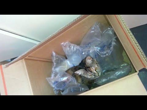 CAT PLAY IN A BOX – Cute Cat VS Box