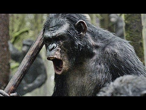 Planet Der Affen Chronologie