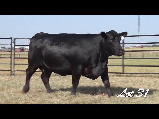 Pollard Farms Lot 31