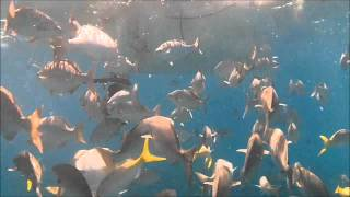 Florida Key Largo Snorkeling Fish Haven High Definition 720