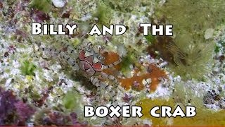 Billy And The Boxer Crab