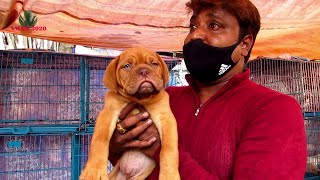 RECENT DOG PUPPY PRICE AT GALIFF STREET PET MARKET KOLKATA | CUTE DOG PUPPY | 10TH JAN 2021 VISIT