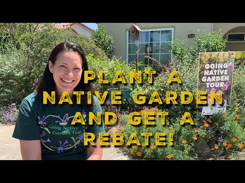 Plant a Native Garden and Get a Rebate!