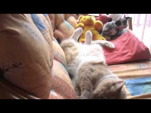 Cats' Love Life and Reiki