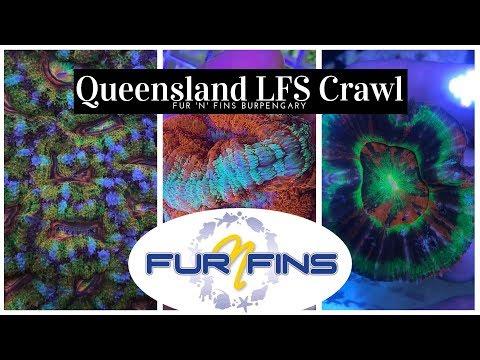 QLD Fish Shop Tour - Fur N Fins