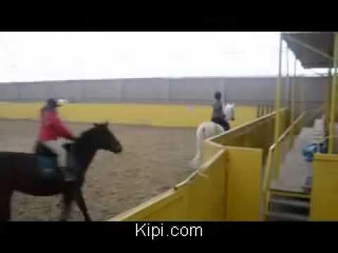 Группа для тех, кто хочет купить или продать русских, орловских,. 89220909779 можно на ватсап фото видео паспортов и самих лошадей. Нравится.