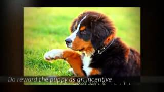 Tips For House Training a Puppy | Puppy Potty Training Tips | Golden Retriever Puppy Training Tips